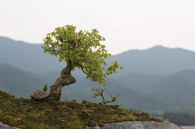 bonsai-2910210_1920
